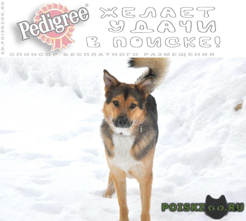 Пропала собака кобель советский р-н г.Нижний Новгород