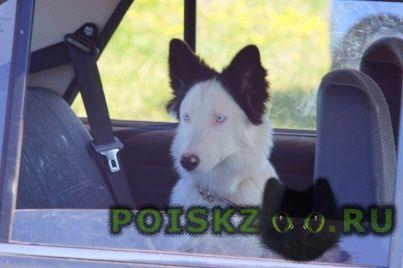 Пропала собака г.Ижевск