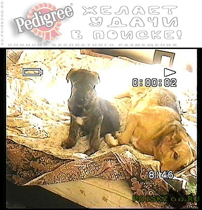 Пропала собака кобель малышечка г.Нижний Новгород