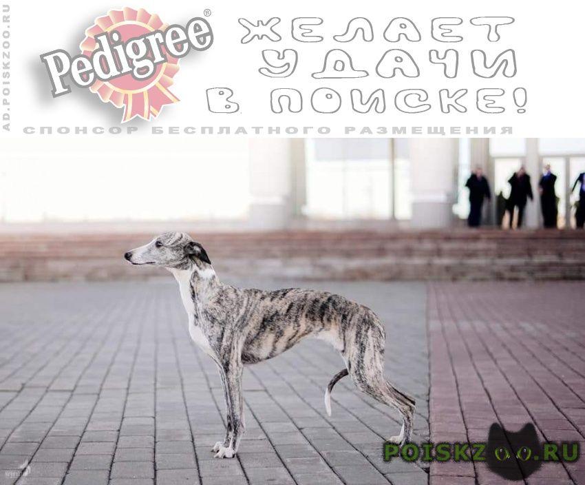 Пропала собака, истра, котерево г.Москва