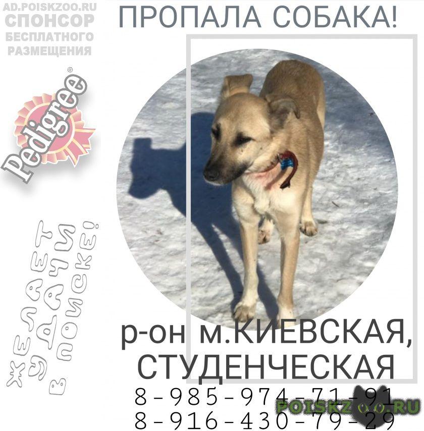 Пропала собака бежевая дворняга г.Москва