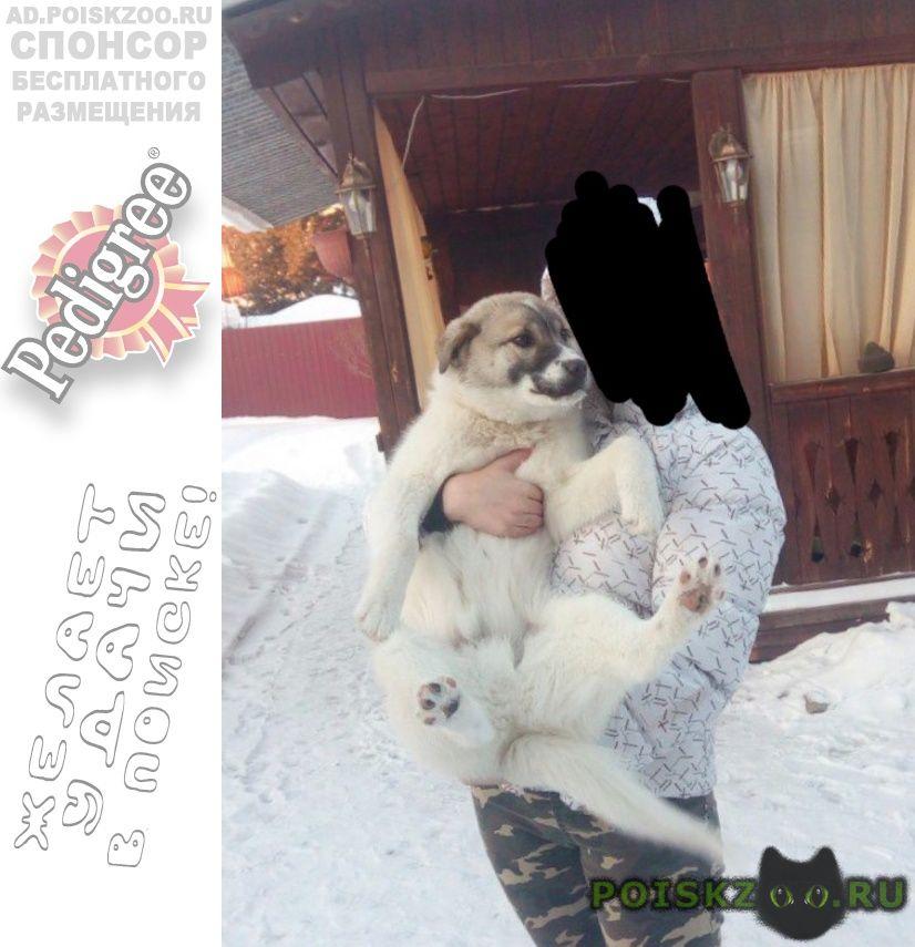Пропала собака кобель прошу помогите г.Ангарск