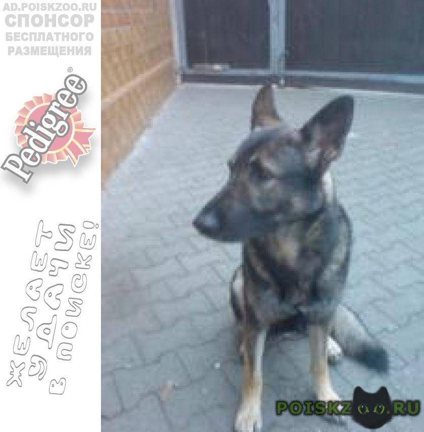 Пропала собака г.Новокузнецк