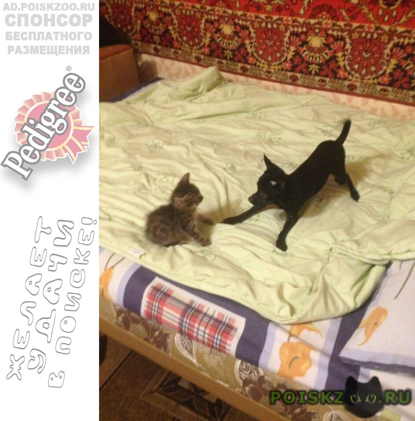 Пропала собака 7 мая в районе 102 кварта г.Ангарск