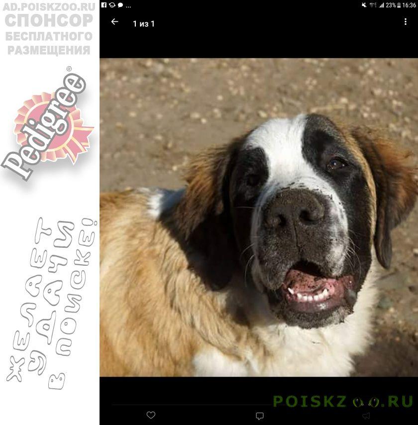 Пропала собака кобель срочно  нужна помощь  г. г.Рыбинск