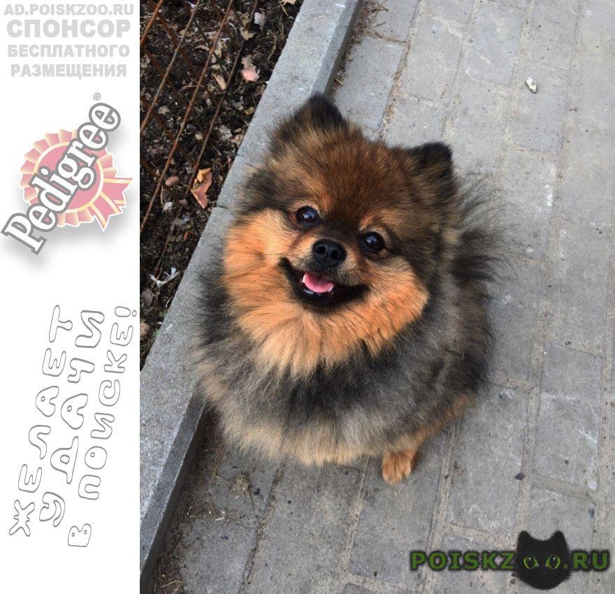 Пропала собака кобель г.Томск