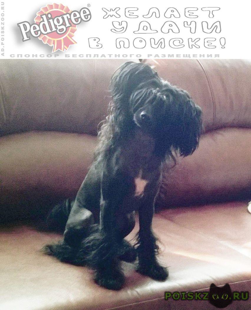 Пропала собака кобель китайская хохлатая г.Старая Купавна