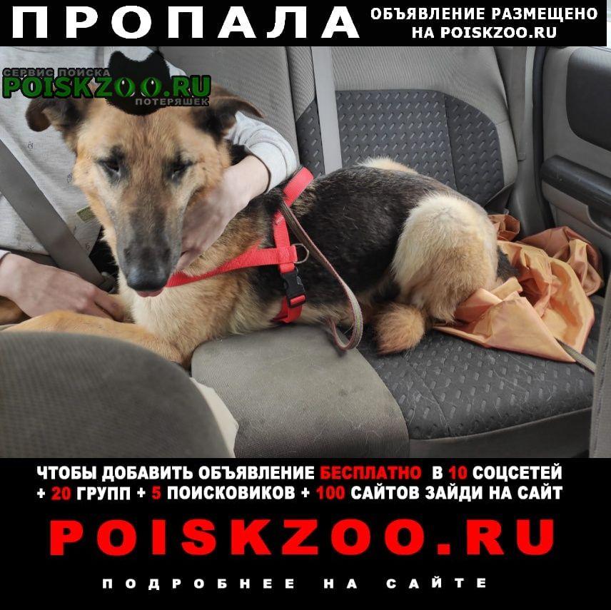 Пропала собака кобель Софрино