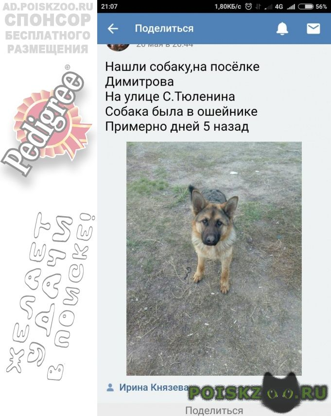 Пропала собака кобель г.Магнитогорск
