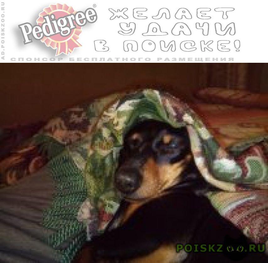 Пропала собака г.Хабаровск