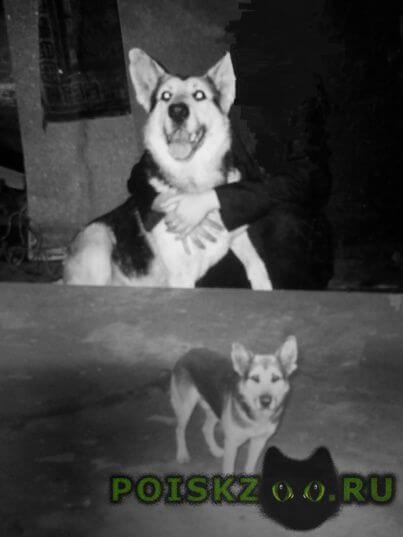 Пропала собака кобель надежда не угасает. г.Екатеринбург