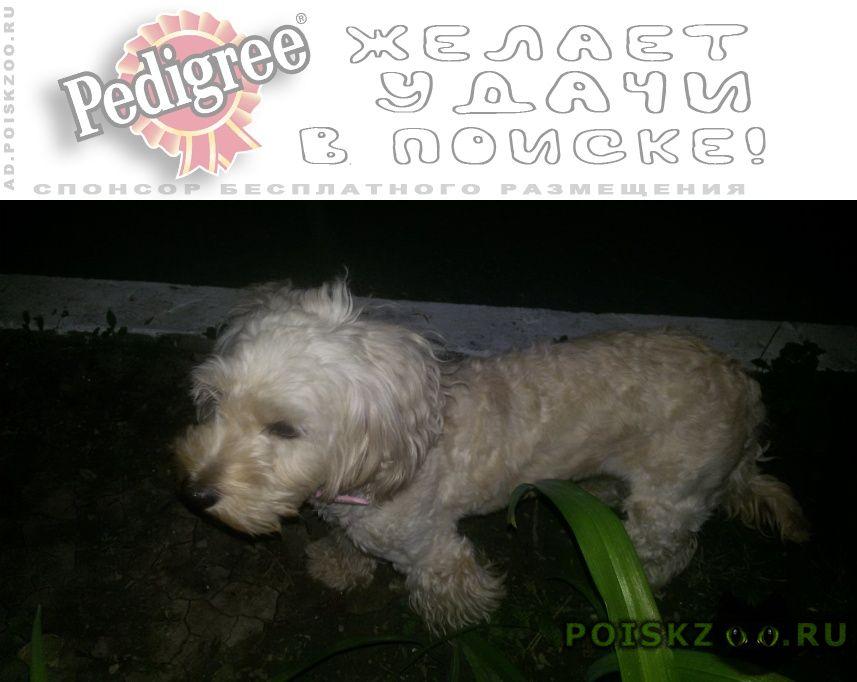 Пропала собака 9 июня 2018 вечером г.Новороссийск