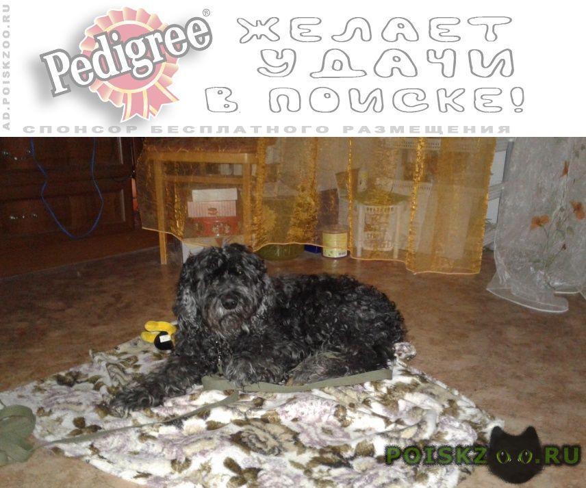 Пропала собака кобель пудель джонни г.Астрахань