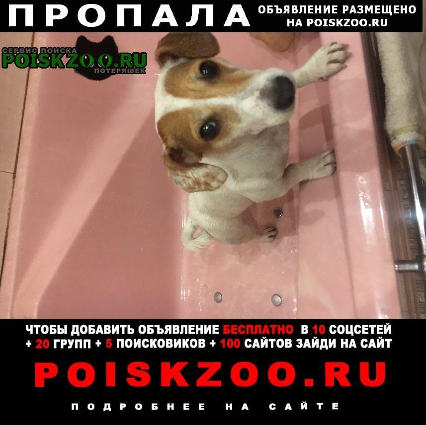 Пропала собака Шатура