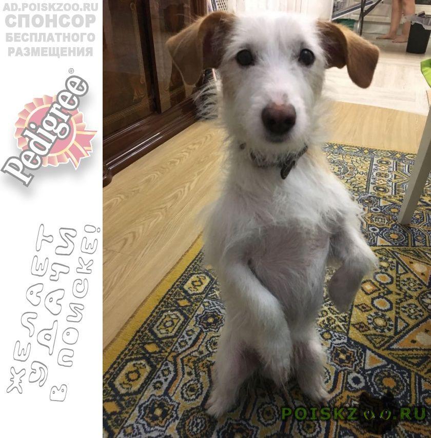Пропала собака кобель г.Мариинск
