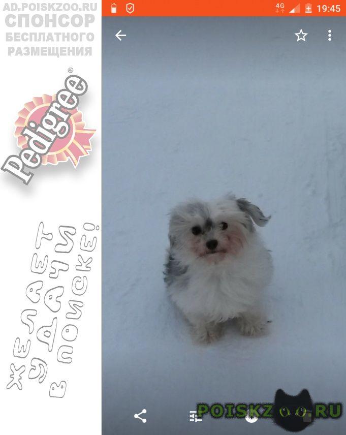 Пропала собака срочно  г.Солнечногорск