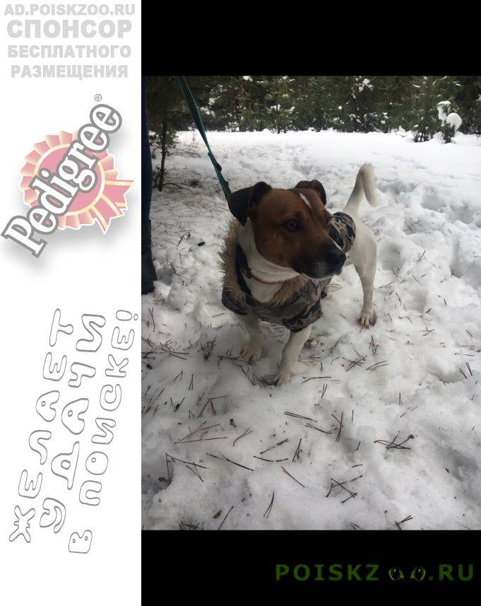 Пропала собака кобель г.Воронеж