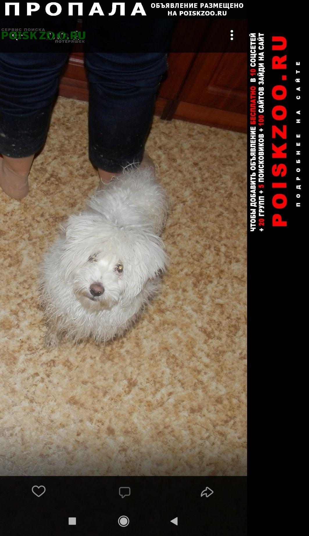 Пропала собака кобель вознаграждение Череповец