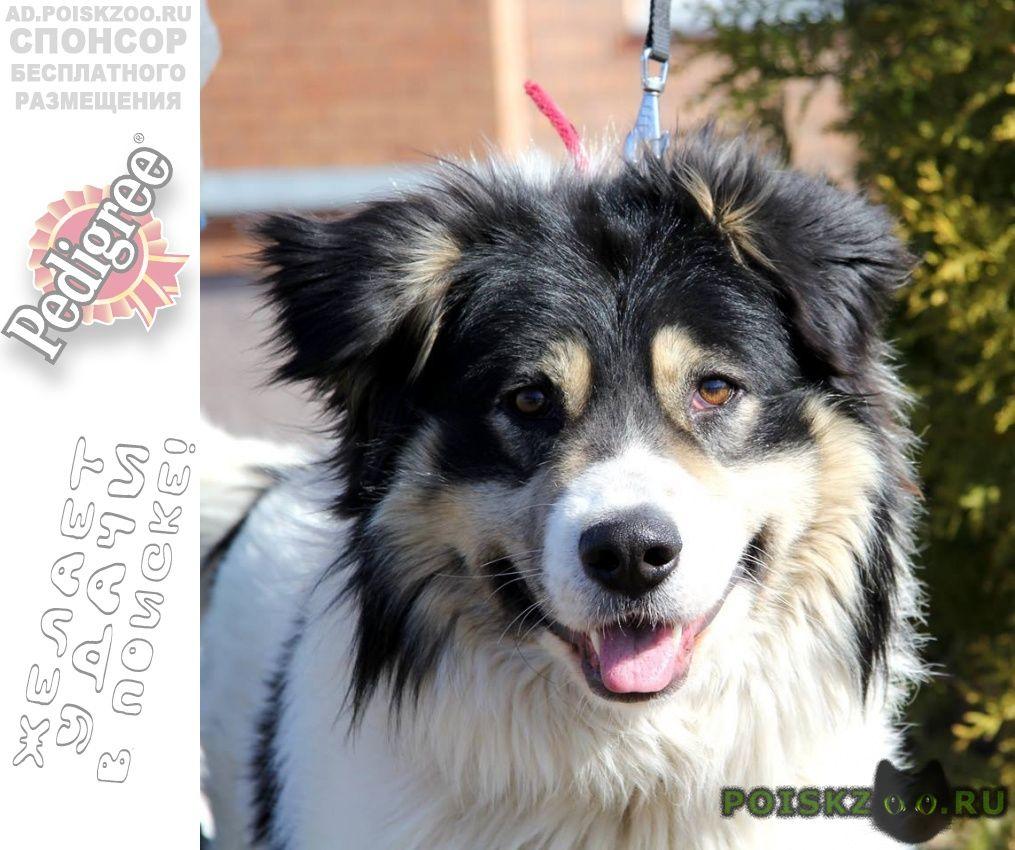 Пропала собака кобель большой пушистый пес г.Москва