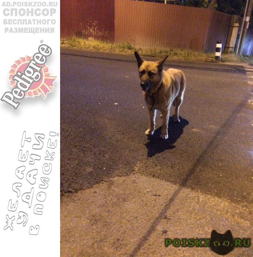 Пропала собака видели собаку в районе строгино г.Москва