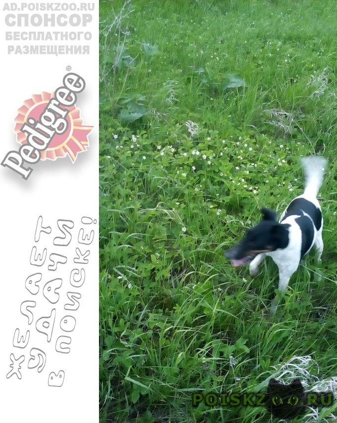 Пропала собака помогите пожалуйста найти собаку г.Октябрьский (Башкирия)