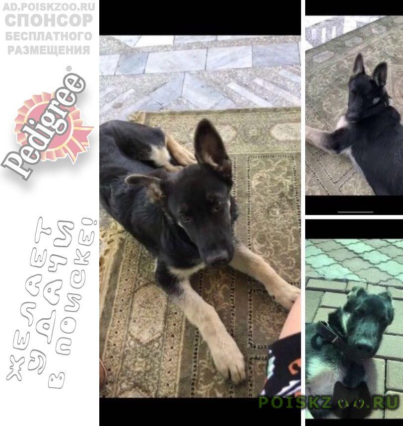 Пропала собака кобель г.Алматы (Алма-Ата)