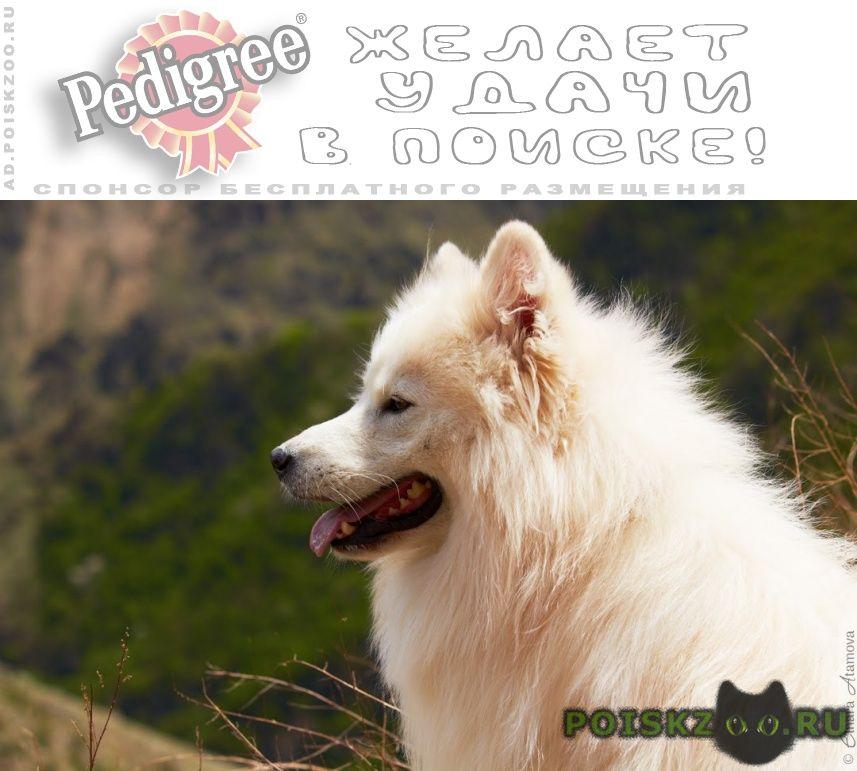 Пропала собака кобель г.Пятигорск