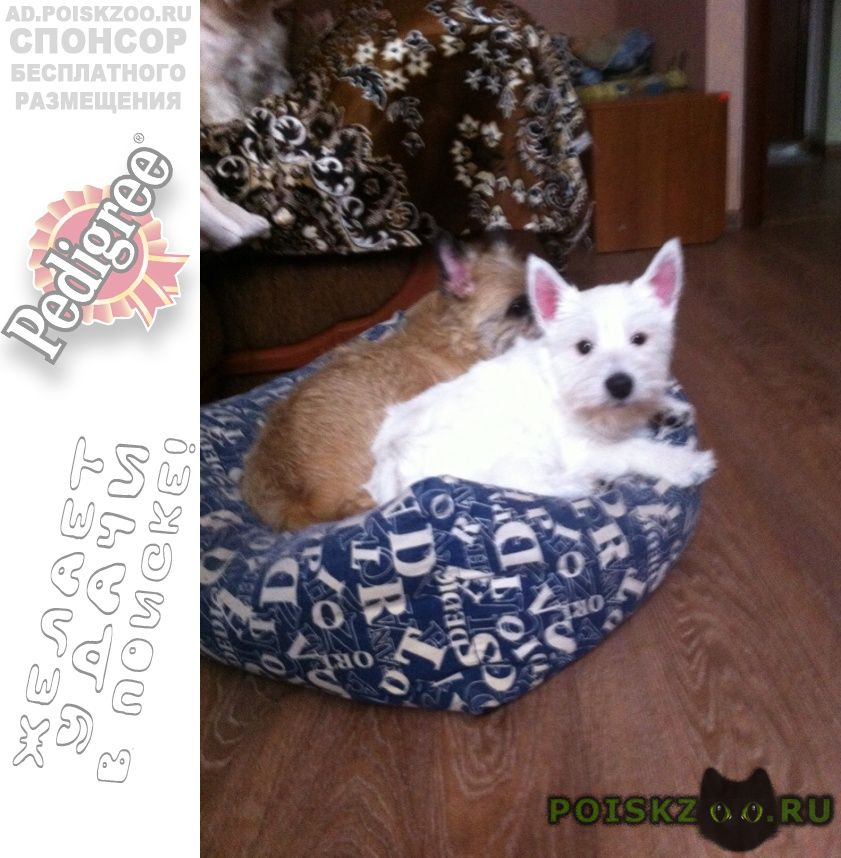 Пропала собака украли на глазах хозяина г.Вологда