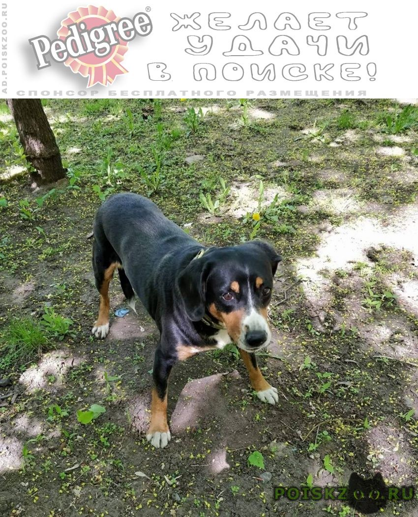 Пропала собака энтлебухер зенненхунд г.Москва