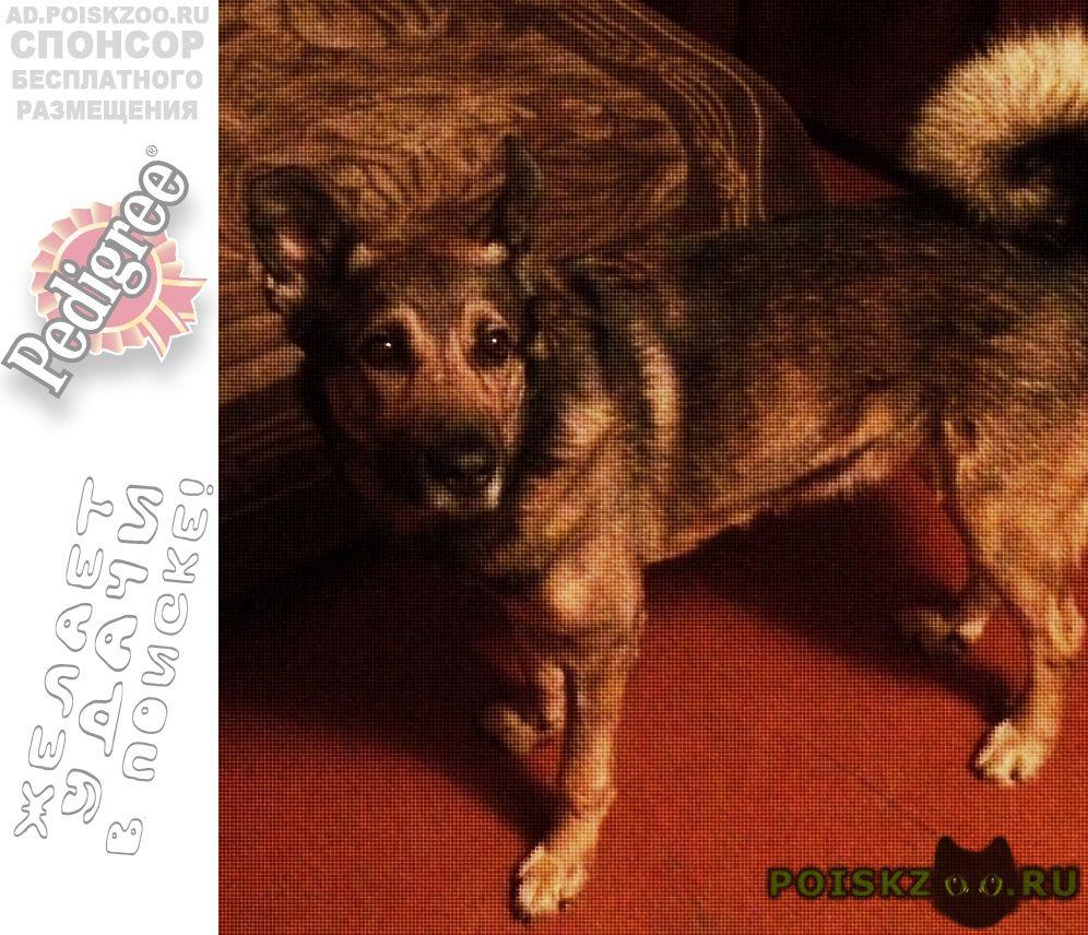 Пропала собака кобель московский район, ул. красных зорь г.Нижний Новгород