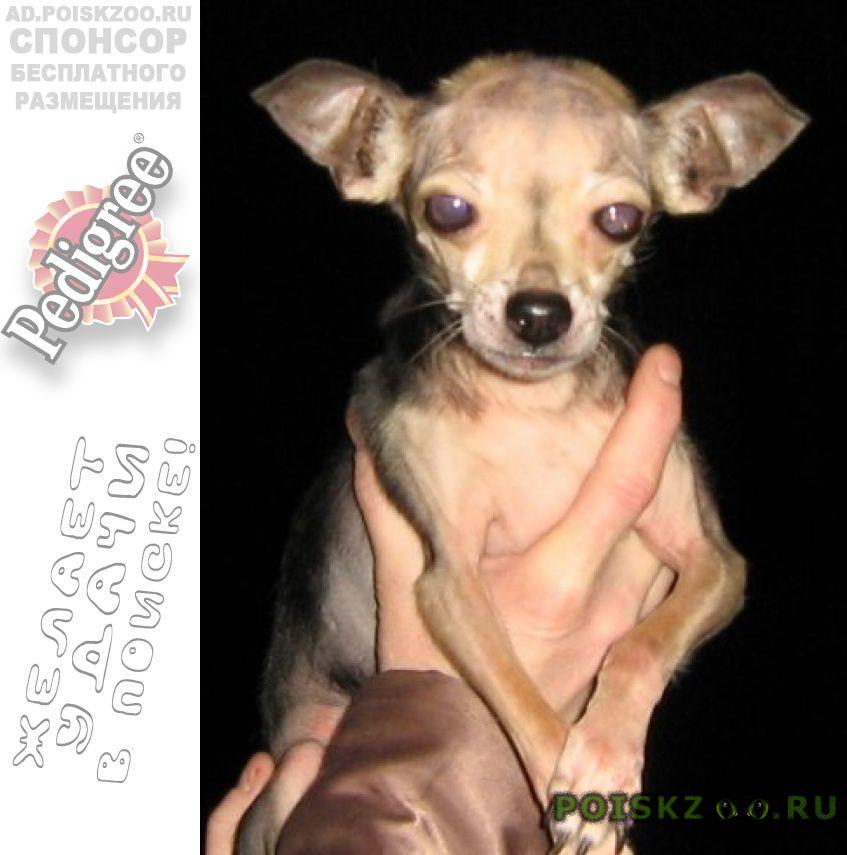 Пропала собака кобель г.Абакан Хакасия