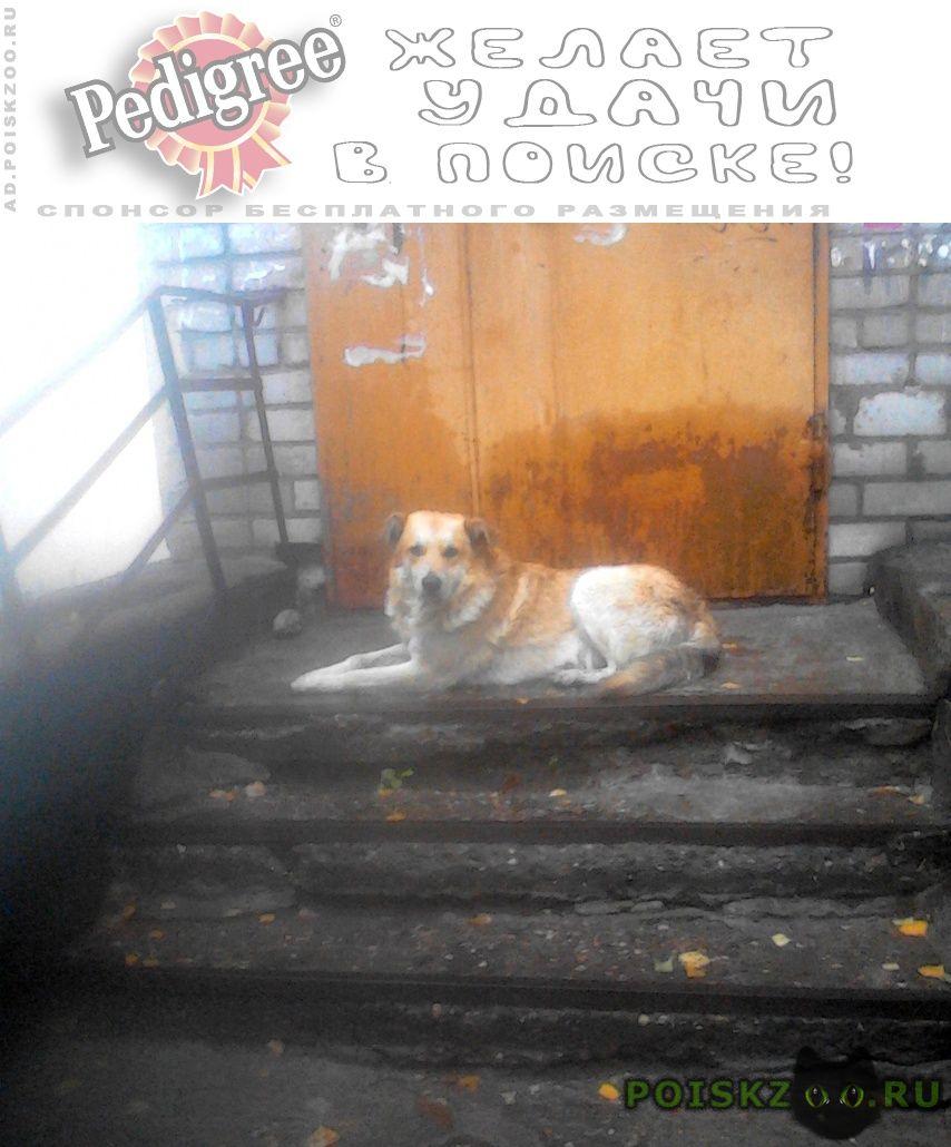 Пропала собака кобель рыжий пес г.Ярославль