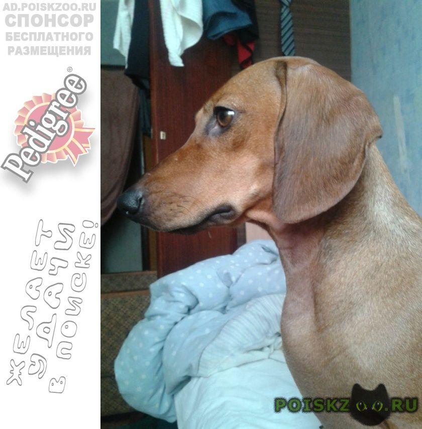Пропала собака по кличке дина г.Евпатория