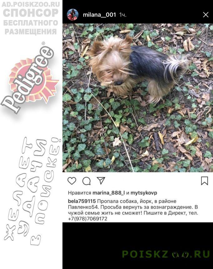 Пропала собака в районе павленко г.Симферополь