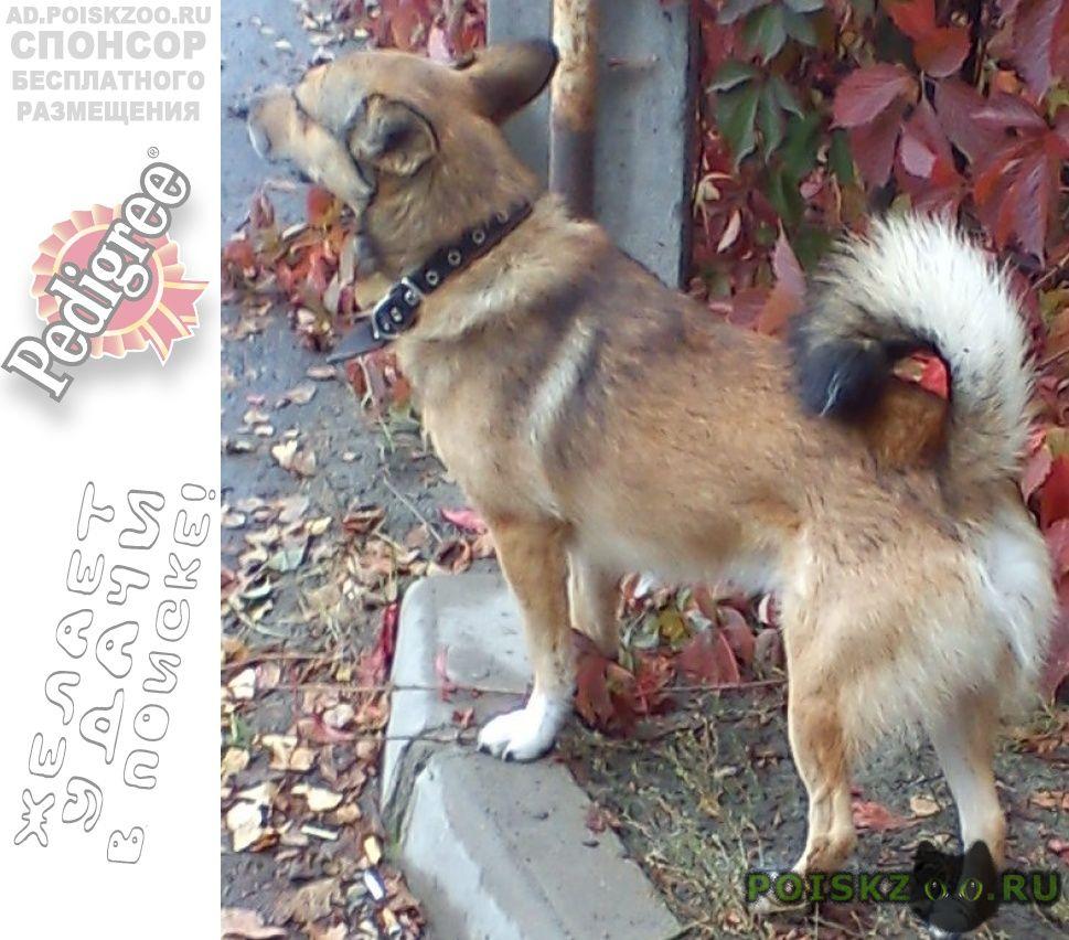 Пропала собака кобель бп в ошейнике г.Брянск