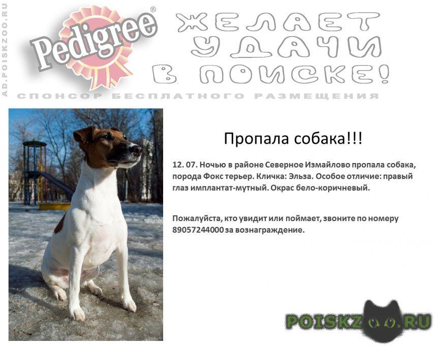 Пропала собака эльза, гладкошерстный фокстерьер г.Москва