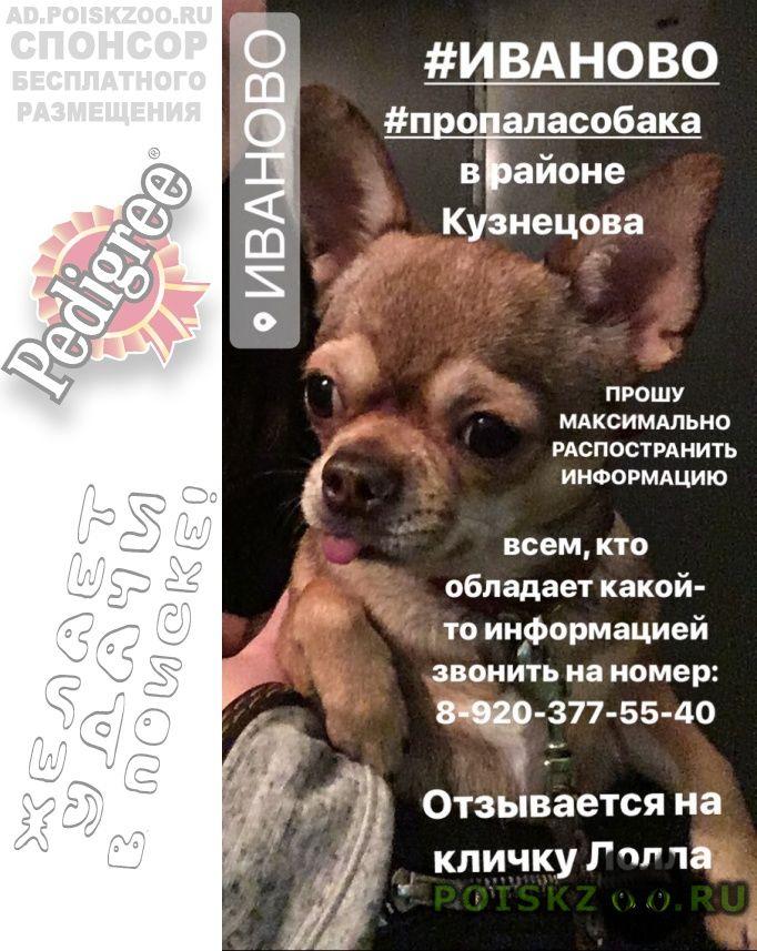 Пропала собака г.Иваново