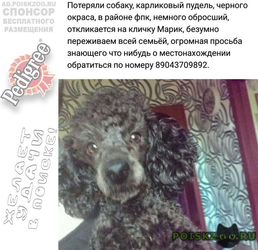Пропала собака кобель член семьи г.Кемерово