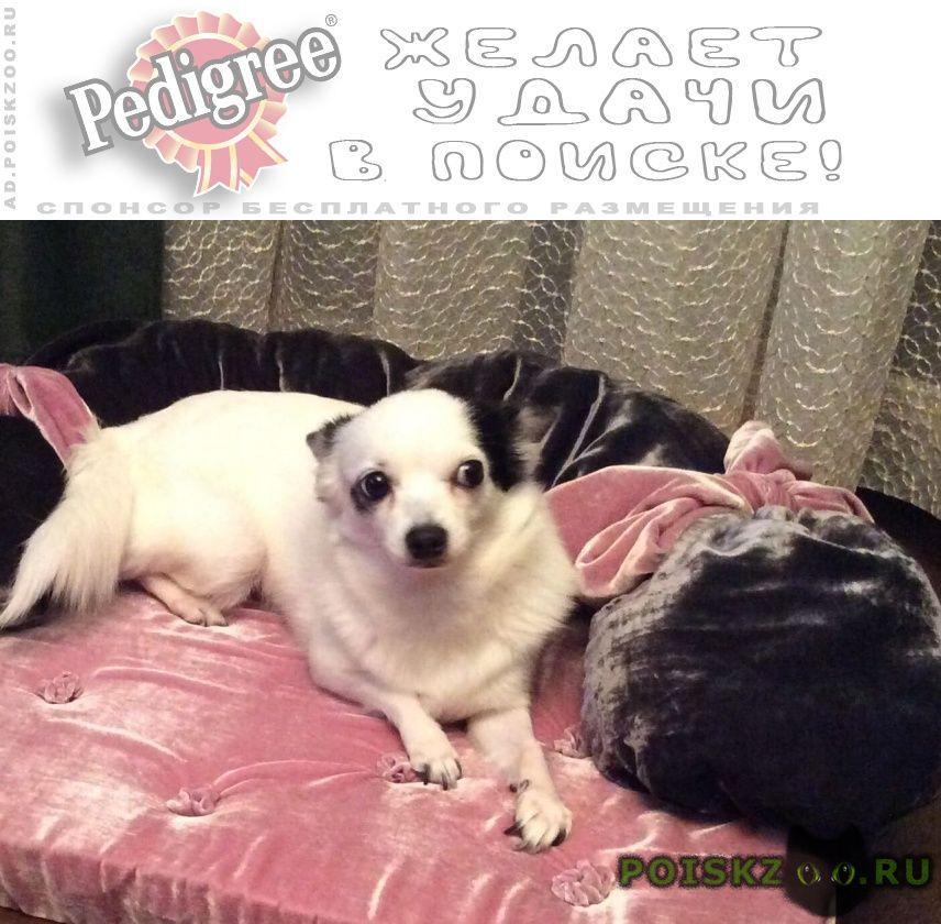 Пропала собака вознаграждение 50000руб г.Санкт-Петербург