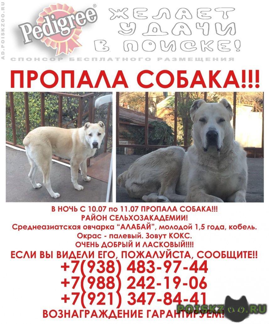 Пропала собака кобель алабай г.Краснодар