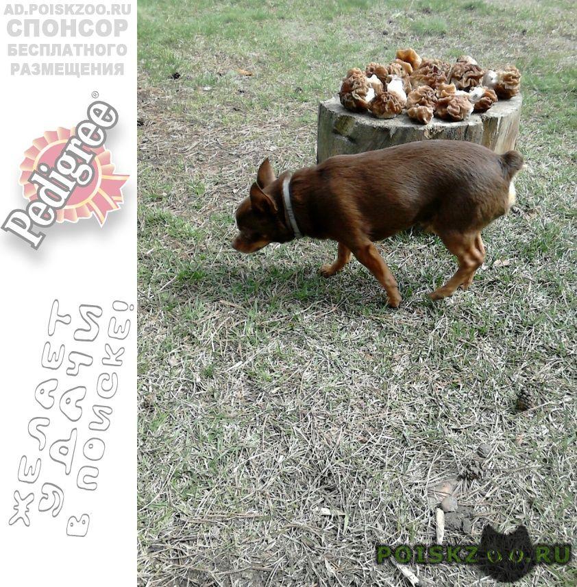 Пропала собака кобель г.Липецк