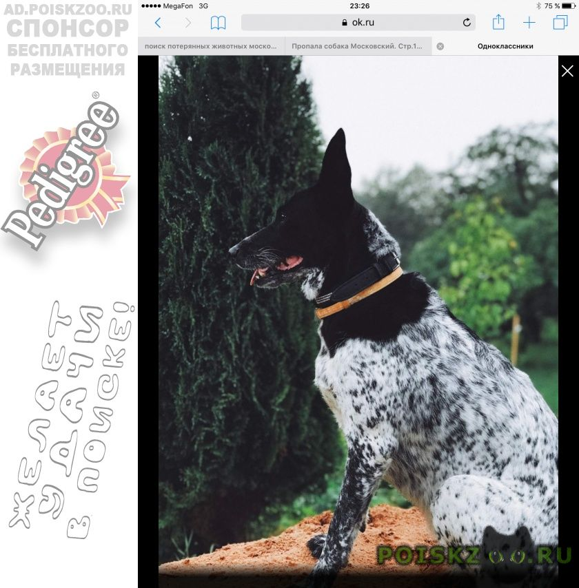 Пропала собака помогите найти члена семьи г.Внуково