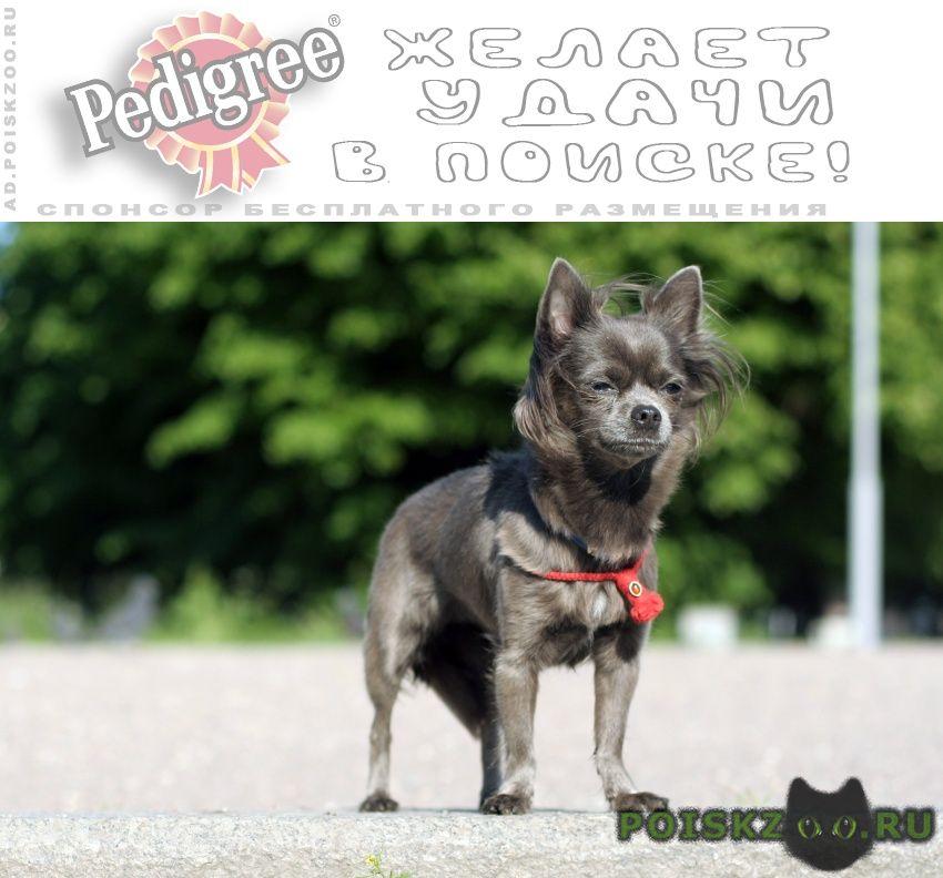 Пропала собака петергоф, александрийский парк г.Санкт-Петербург