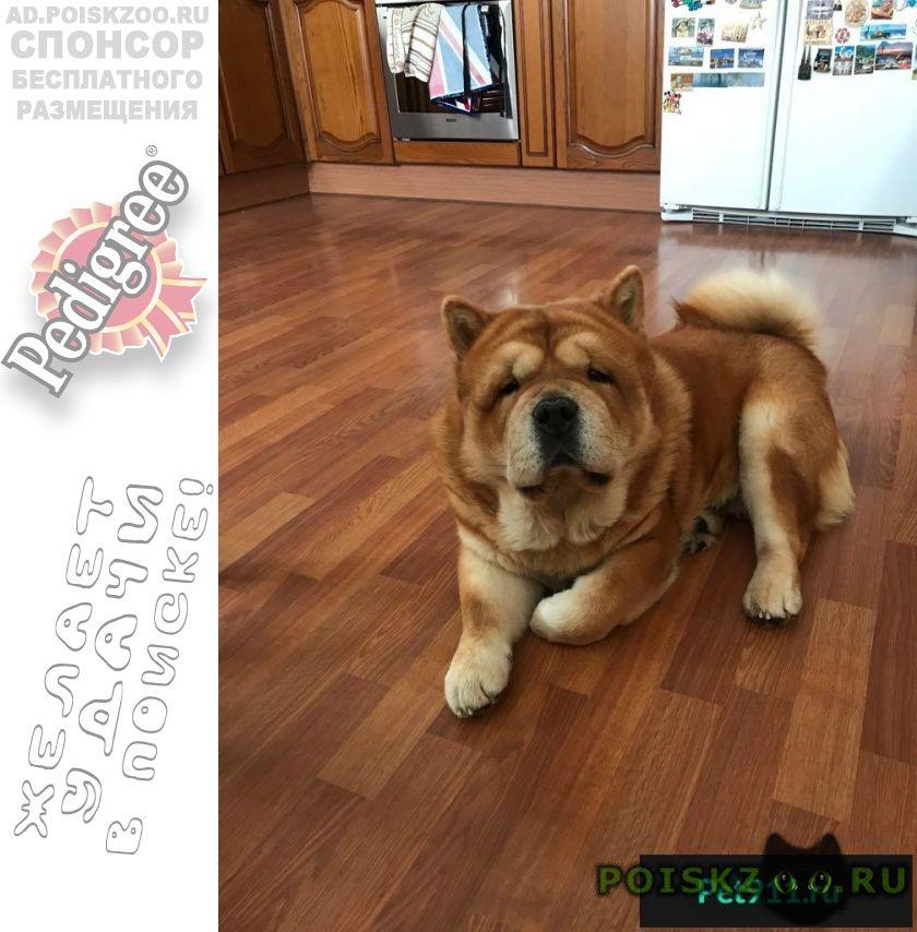 Пропала собака кобель большое вознаграждение гарантируется  г.Москва