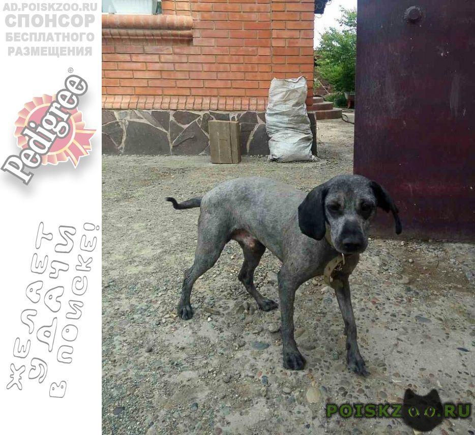 Пропала собака кобель пёс г.Абакан Хакасия