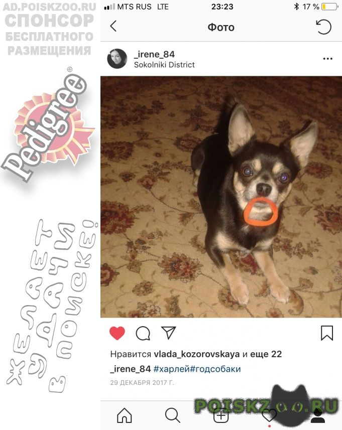 Пропала собака кобель г.Переславль-Залесский