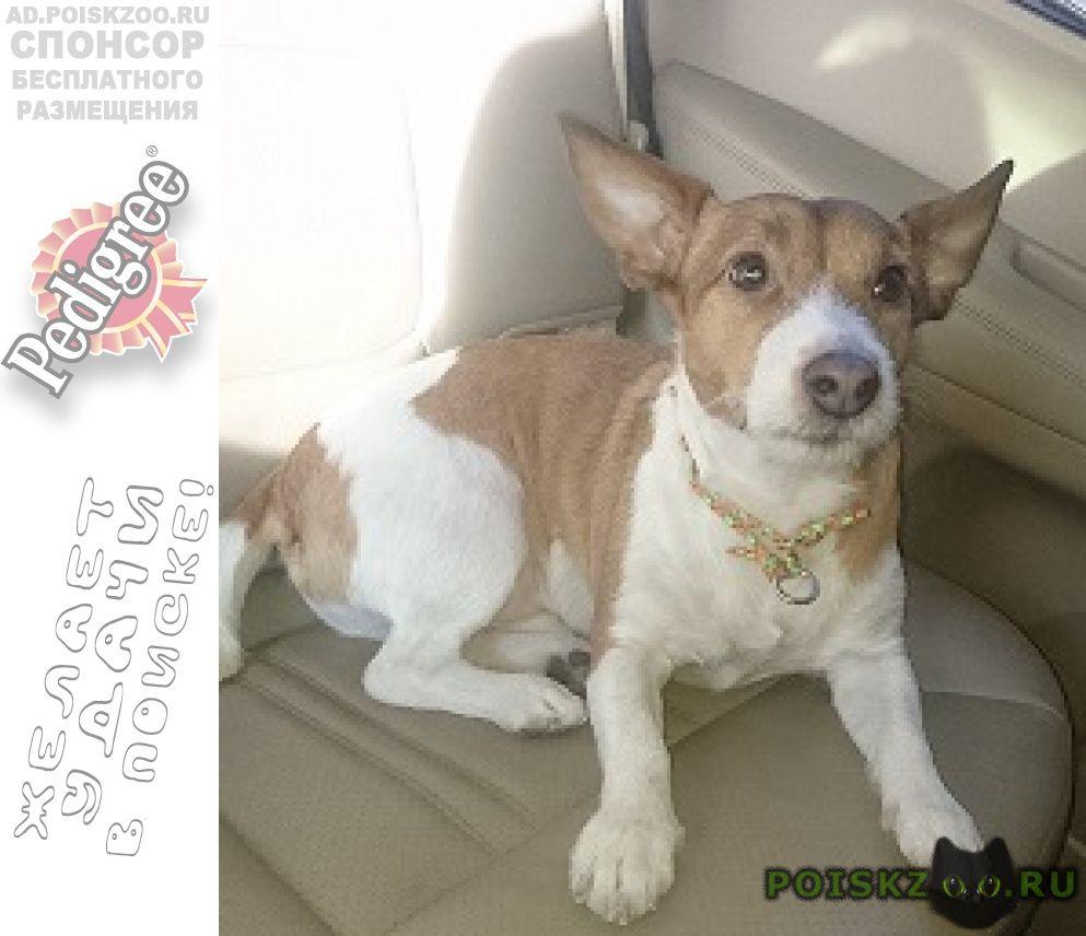 Пропала собака кобель платформа миитовская г.Дедовск