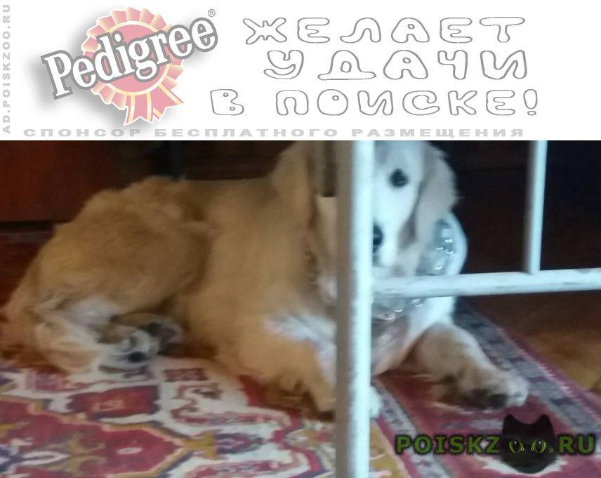 Пропала собака кобель г.Авдеевка