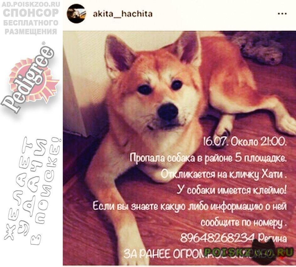 Пропала собака ищу своего питомца г.Хабаровск