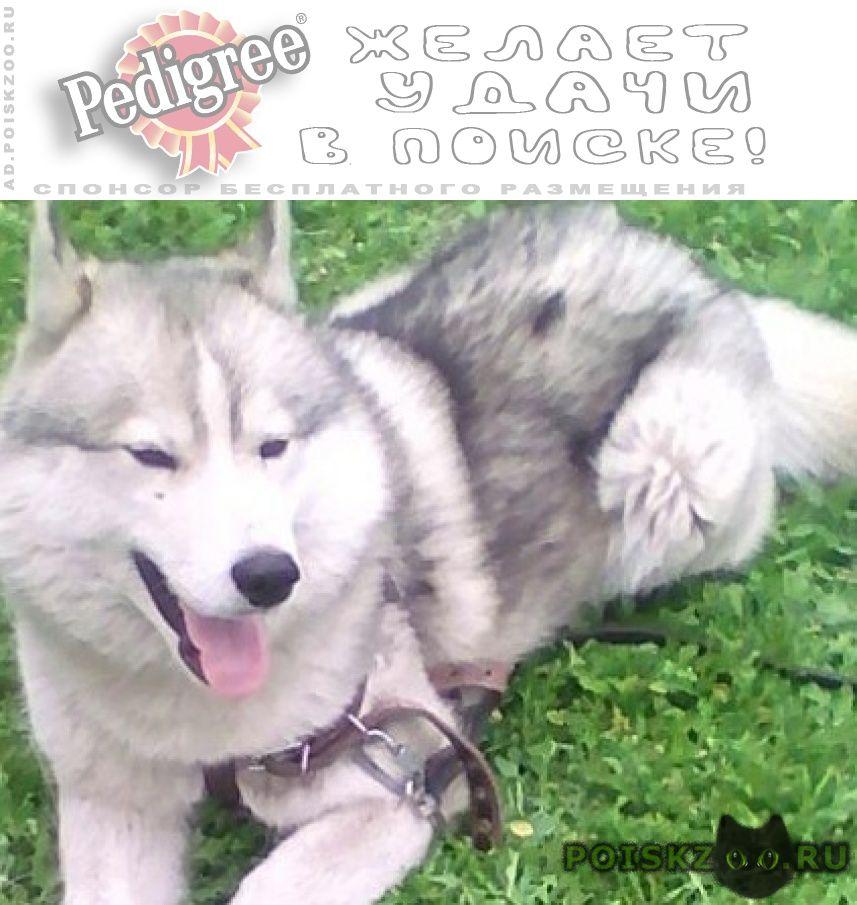 Пропала собака кобель помогите найти любимца г.Чита